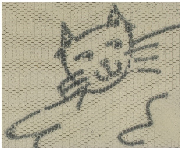 "A close-up photograph of the smiling cat from the Magna Doodle screen, included as a ""before"" shot, upon its inscription in October 2017."