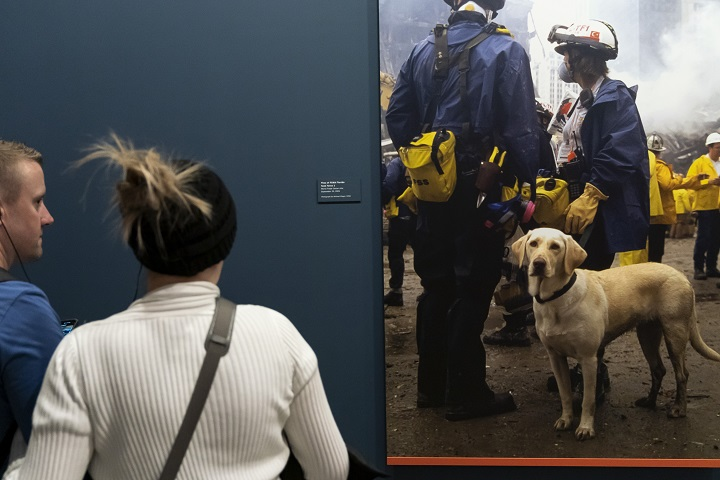 A woman in a white turtleneck and a man in a blue shirt stand in front of a blue wall looking at a blown-up photograph of a dog standing alongside rescue and recovery workers.