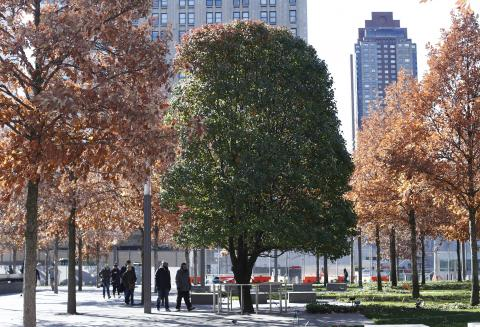 The green leaves of the Survivor Tree contrast against the orange leaves of surrounding swamp white oaks as several visitors walk by on Memorial plaza.