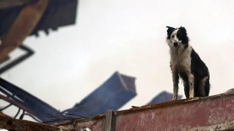 A black-and-white shepherd dog stands on a red, rusted steel support beam at Ground Zero beneath an overcast sky.